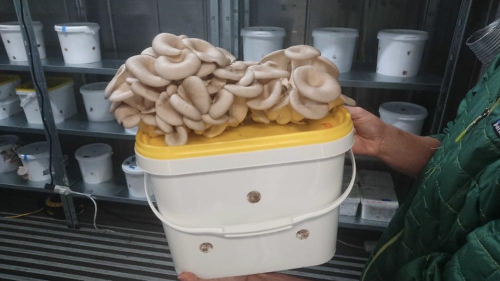 Sopp fra gruten i majonesbøtte
